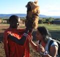 masai head