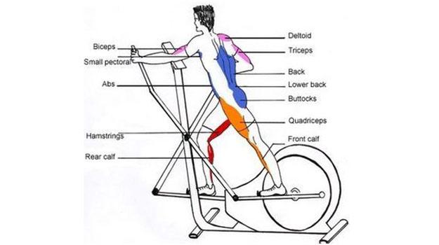 про них на какие мышцы влияет велотренажер картинки название одной версий