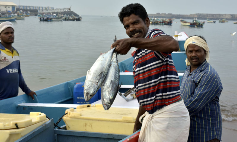 Fishermen haul in fresh catch in Kerala